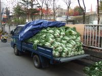 Truck of cabbage